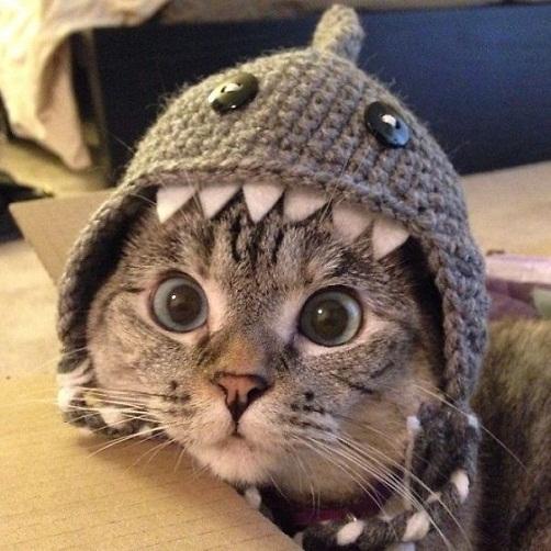 Unduh 66+  Gambar Kucing Lucu Di Instagram Paling Lucu HD